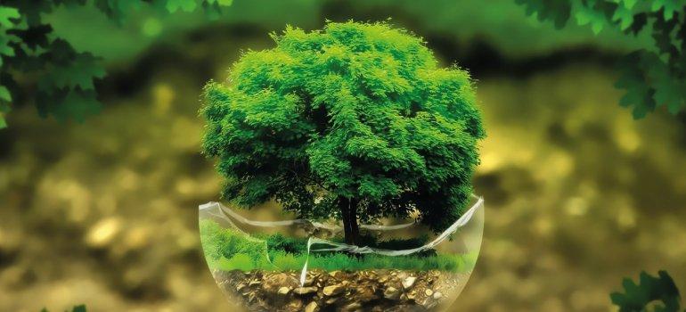 Pilares para um futuro biomimético